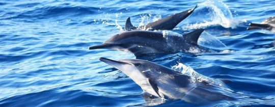 Dolfijnen Spotten vanuit Bohol, Central Visayas, Filipijnen