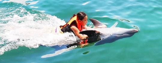 Zwemmen met Dolfijnen - Subic Bay, Luzon, Filipijnen