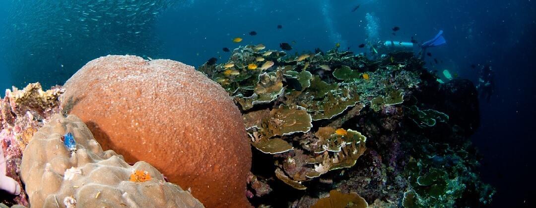 Duiken bij Moalboal – Cebu Island