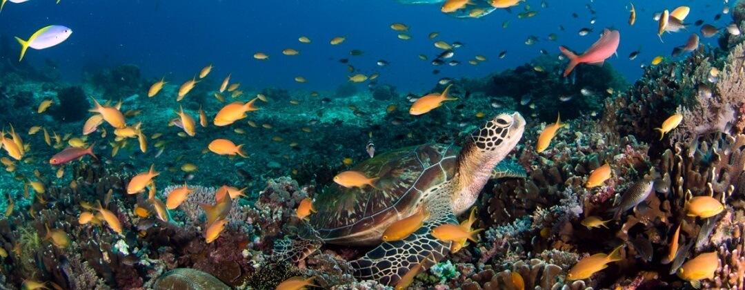 Puerto Galera biedt goede mogelijkheden om te snorkelen en te duiken
