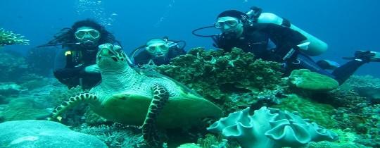 Duiken met een zeeschildpad - Apo Island, Negros Oriental, Central Visayas, Filipijnen