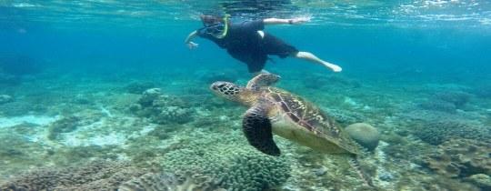 Zeeschildpad - Apo Island, Negros Oriental, Central Visayas, Filipijnen