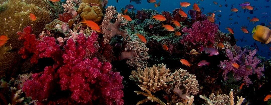 Duiken Balicasag Island – Bohol